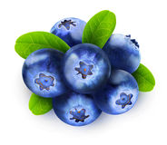 Isolated blueberry Royalty Free Stock Photography