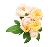 Isolated bouquet of roses with leaves Stock Photography