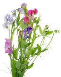 Isolated Bouquet from Sweet pea  Stock Photography