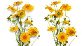 Isolated bouquet of yellow daisy-gerbera Royalty Free Stock Images