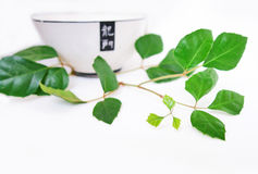 Isolated branch. With a bowl Stock Image