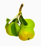 Isolated branche with pears Stock Images