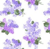 Isolated branches of lilacs on a white background stock photography