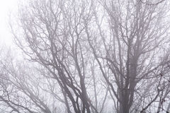 Isolated branches over white sky. Black bare tree branches on wh. Ite frozen sky in wintertime Royalty Free Stock Photo