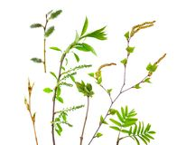 Isolated branches of young trees stock image