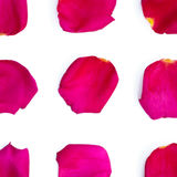 Isolated bright rose petals. On a white background Royalty Free Stock Photos