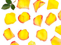 Isolated bright rose petals. On a white background Stock Photo
