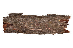 Isolated broken bark stub log, wooden texture. Close-up of isolated broken stub log bark with wooden texture isolated on white background stock image