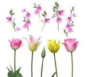 Set of flowers on a white background Royalty Free Stock Photos