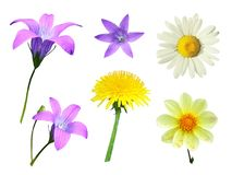 Set of flowers on a white background Stock Photos
