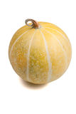 Isolated buffalo gourd. A North American wild buffalo gourd royalty free stock image