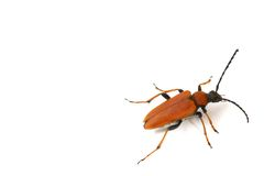 Isolated bug Royalty Free Stock Image