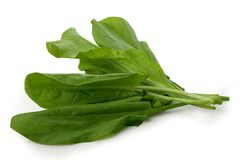 Bunch of sorrel. Isolated bunch of fresh green sorrel on the white Royalty Free Stock Photography