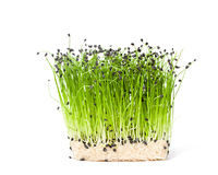 Isolated bunch of garlic chives stock photos
