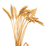 Isolated bunch of wheat Royalty Free Stock Photo