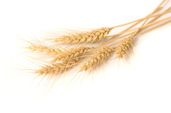 Isolated bunch of wheat stock photo