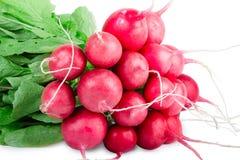 Isolated bundle of radish royalty free stock images