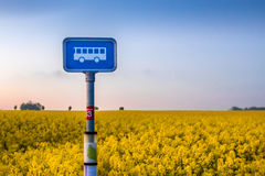 Isolated bus sign standing next to a yellow field of flowers in the afternoon Stock Image