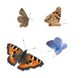 Isolated butterflies Royalty Free Stock Images