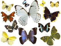 Isolated butterflies stock photography