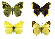 Isolated butterflies Royalty Free Stock Photos