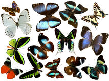 Isolated butterflies Stock Photo