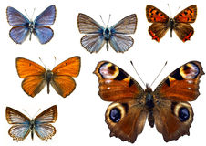 Isolated butterflies Stock Images