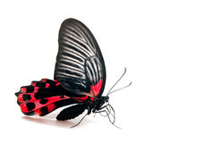 Isolated butterfly Stock Photos