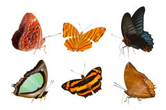 Isolated Butterfly collection Royalty Free Stock Images