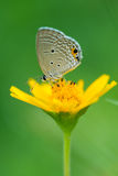 Isolated butterfly on the flower Stock Photography
