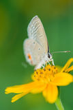 Isolated butterfly on the flower Stock Images