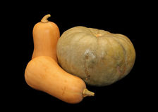 Isolated Butternut Squashes and Pumpkin Stock Photos