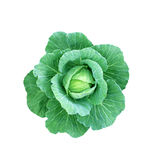 Isolated cabbage Stock Image