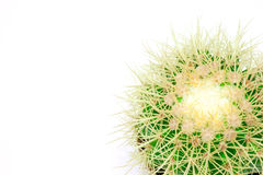 Isolated cactus in a pod Royalty Free Stock Images