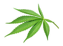 Isolated Cannabis leaf Royalty Free Stock Image