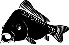 Carp. Isolated carp fish - clip art illustration Stock Photography