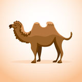 Isolated cartoon camel. Cartoon camel on isolated background. Flat style illustration Royalty Free Stock Photos