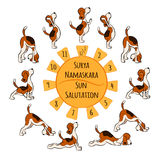 Isolated cartoon funny dog doing yoga position of Surya Namaskara Royalty Free Stock Images