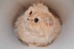 Isolated cat Stock Photo