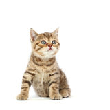 Isolated cat Stock Photos