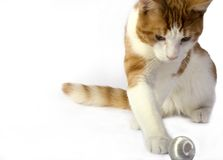 Isolated Cat Stock Images