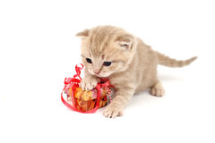 Isolated Cat And Gift Royalty Free Stock Photo