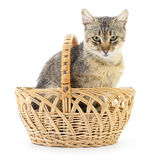 Isolated cat in basket. Royalty Free Stock Images
