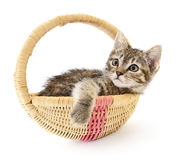 Isolated cat in basket. Royalty Free Stock Image