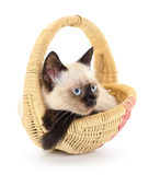 Isolated cat in basket. Royalty Free Stock Photography