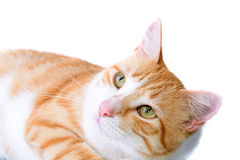 Isolated Cat Stock Photography