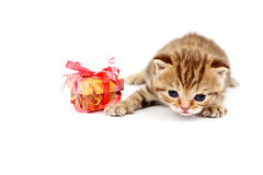 Isolated cat and gift Stock Images