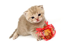 Isolated cat and gift Royalty Free Stock Photography