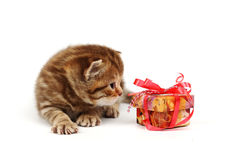 Isolated cat and gift Royalty Free Stock Images