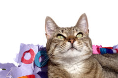 Isolated cat looking up. Over white Royalty Free Stock Photos